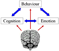 neuropsychologist-understanding-the-direct-and-indirect-effects-of-brain-dysfunction